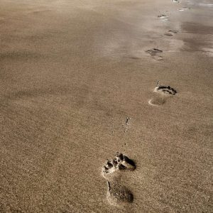 Image of Footprints on a beach
